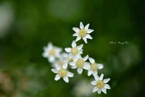 floare 2